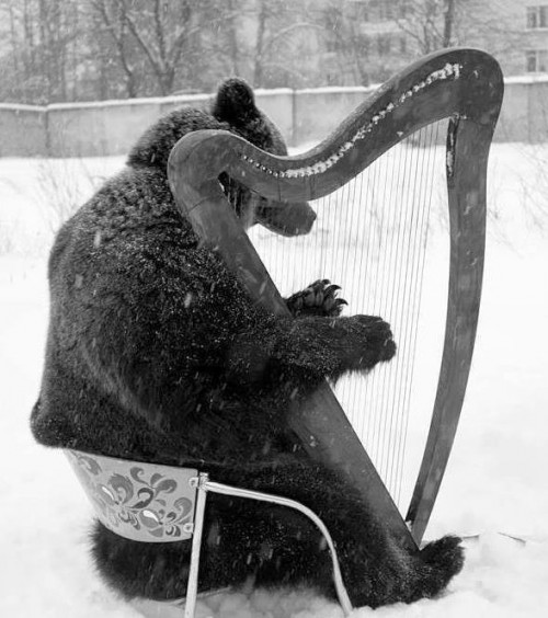 Teddy Land: Bear playing the harp