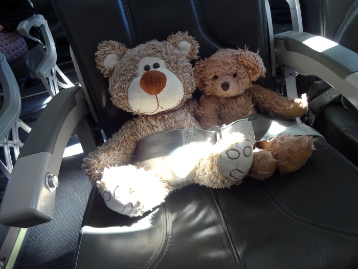Teddy Land: Time to fasten the seat belts