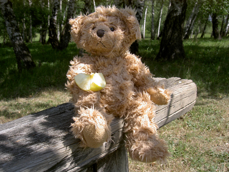 Teddy Land: I like fruits and to go places