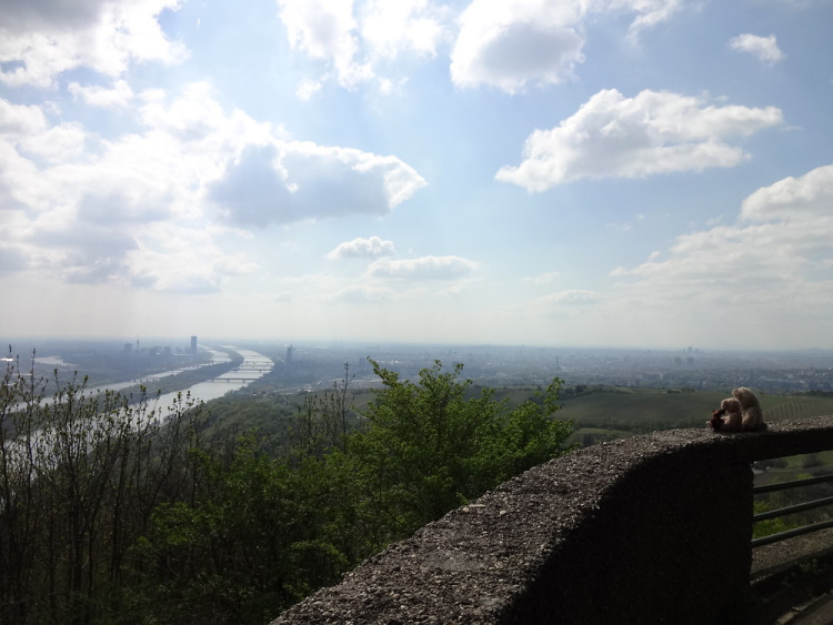 Teddy Land: View of the Danube from Leopoldsberg