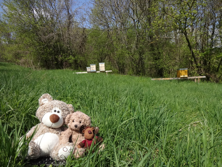 Teddy Land: Bee season is open!