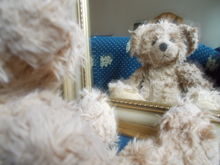 Teddy Land: Mirror, mirror on the wall, who Is the fairest of them all?