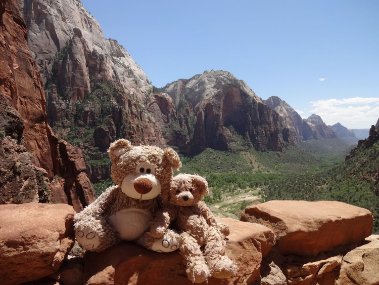 Teddy land: Zion West Rim
