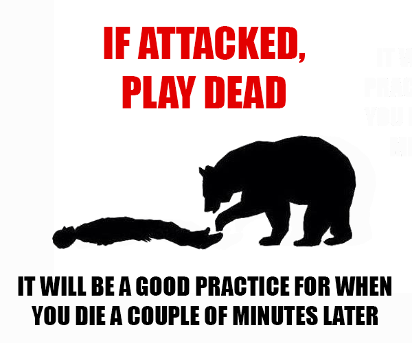 Teddy Land: Bear attack tips