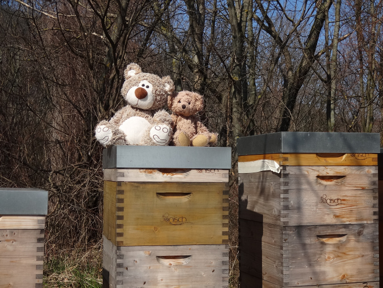 Teddy Land: Beehives