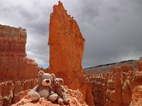 Teddy Land: Bryce Canyon