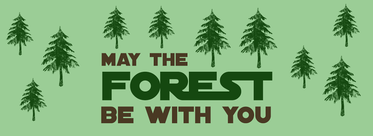 Teddy Land: May The Forest Be With You