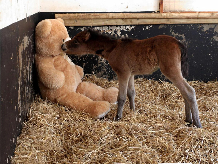 Teddy Land: Orphaned pony Breeze and his 4tf Teddy Bear called Button