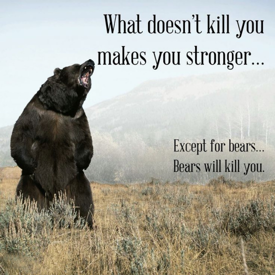 Teddy Land: What doesn't kill you makes you stronger... Except for bears... Bears will kill you.