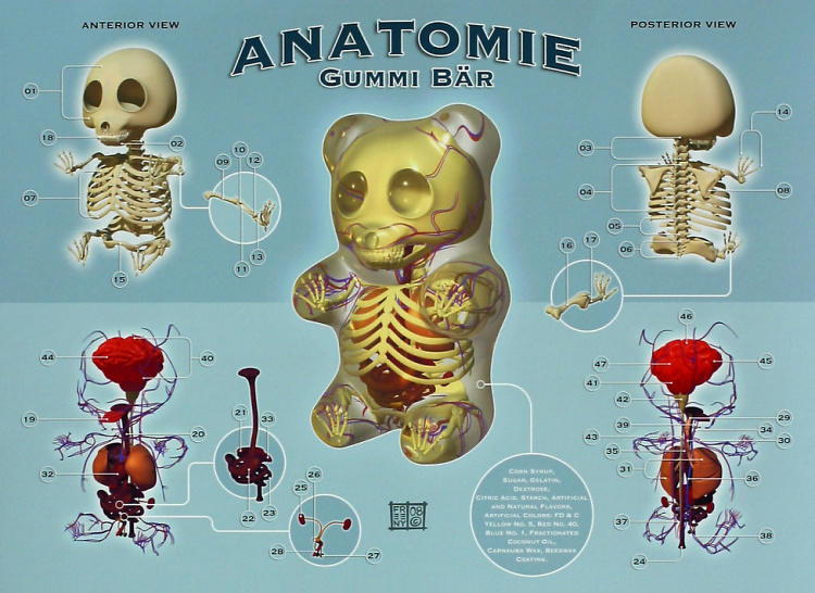 Teddy Land: Gummy Bear anatomy