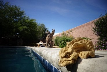 Creatures in our backyard - Las Vegas, Nevada