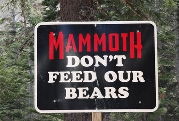 Don't Feed Our Bears ... and some bear claw marks of disagreement