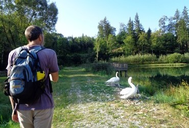 Passing by swans with little ones is harder than going by a bull carrying a red backpack.