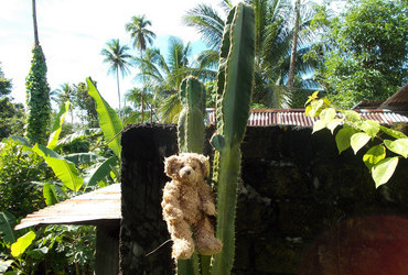 It's not very comfortable to sit on a cactus, you know - Siau, Sulawesi, Indonesia