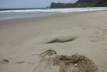 Las Cuevas Bay, Trinidad - Leatherback turtle egg, we found it and we buried it