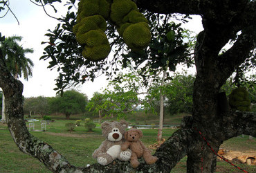 Jackfruit is the largest tree-borne fruit in the world reaching 80 pounds - Port of Spain, Trinidad and Tobago