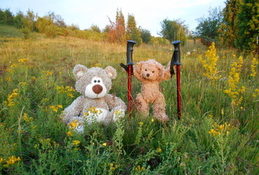Two bears wit only one pair of hiking poles - Vitosha Mountain, Bulgaria
