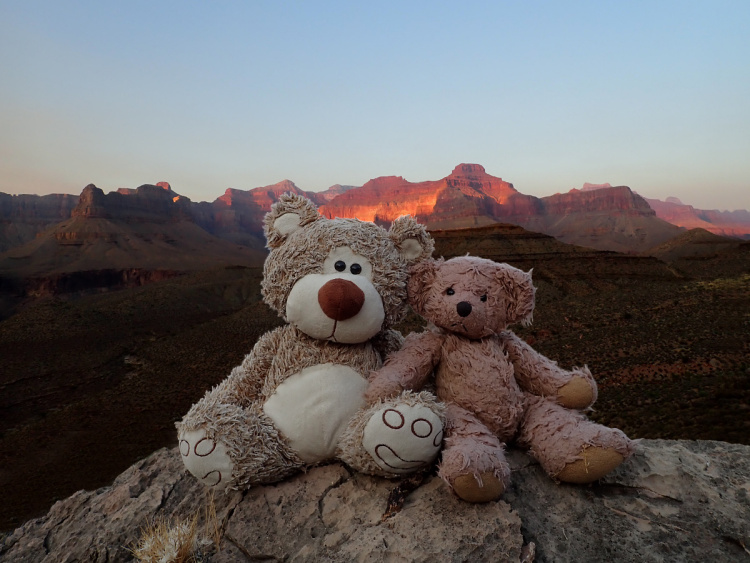 Teddy Land: Grand Canyon