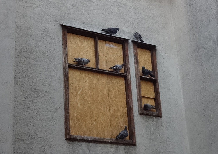 Teddy Land: Hotel for Pigeons