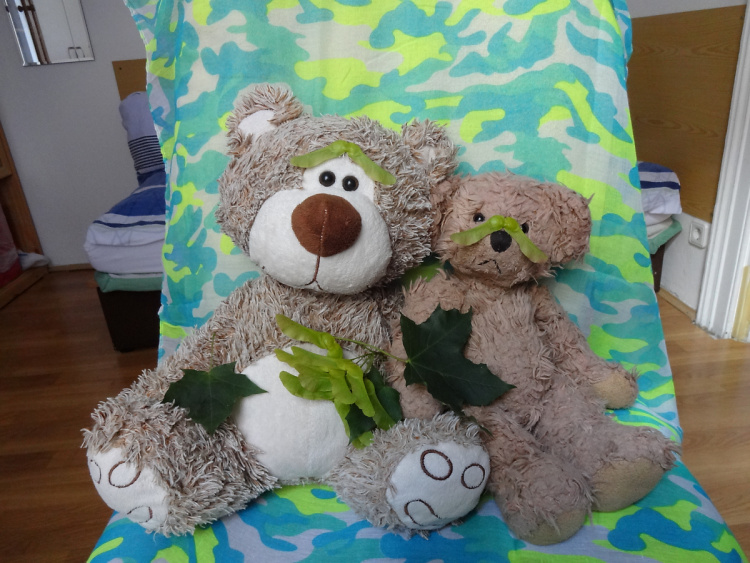 Teddy Land: Maple tree disguise
