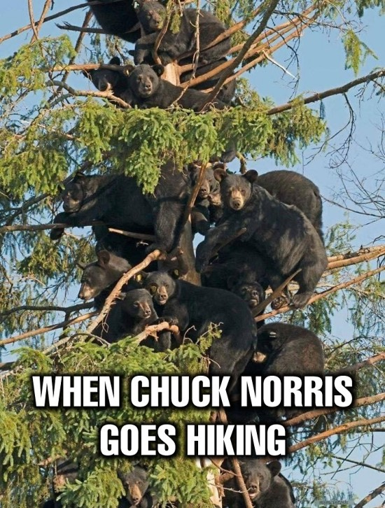 Teddy Land: When Chuck Norris goes hiking