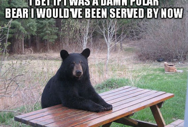 I bet if I was a damn polar bear I would've been served by now.